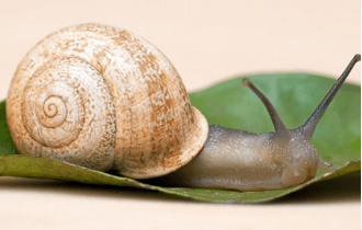 Snail extract, on the trail of beauty!